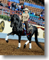 USDF Image of western dressage