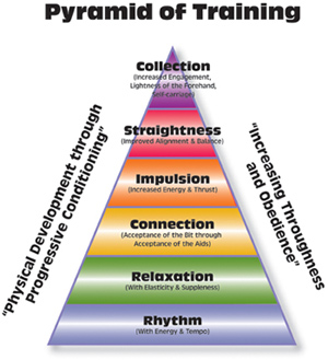 Pyramid of Training