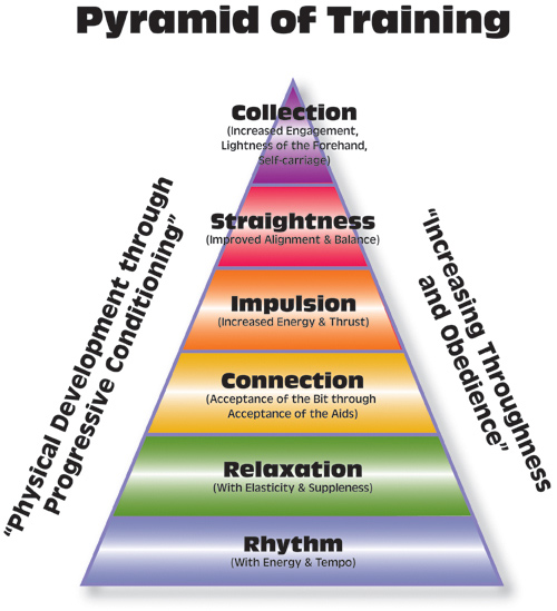 Pyramid of training click to enlarge